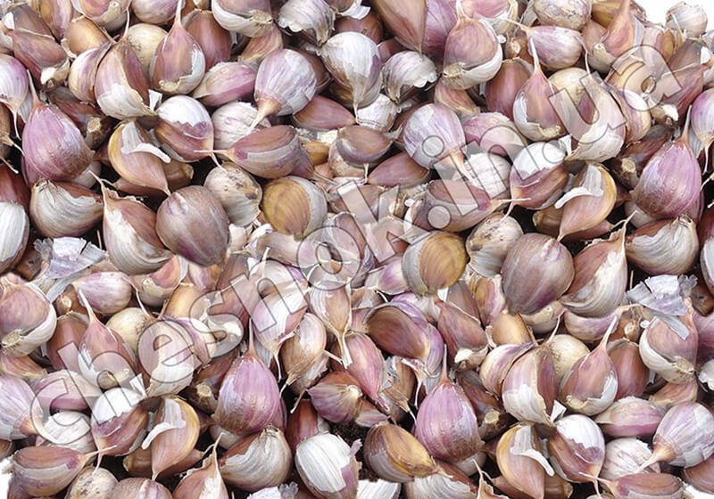 Семена зубок чеснока